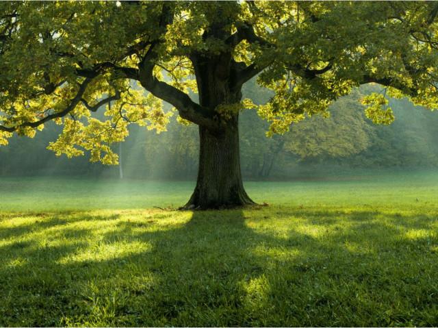 The Alchemist's Tree